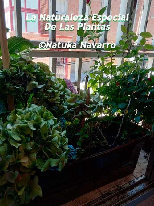 La Naturaleza Especial De Las Plantas